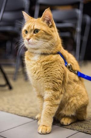 Una play... felina!!