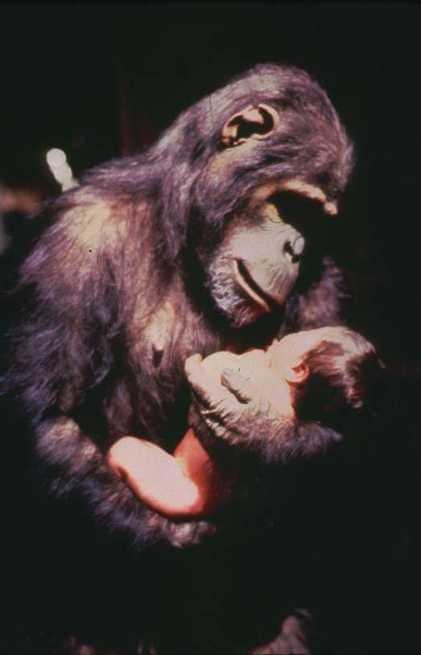 2/7 - Greystoke - La leggenda di Tarzan il signore delle scimmie