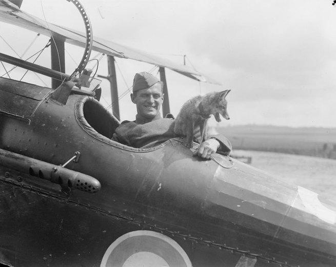 2/2 - Animali nella grande guerra