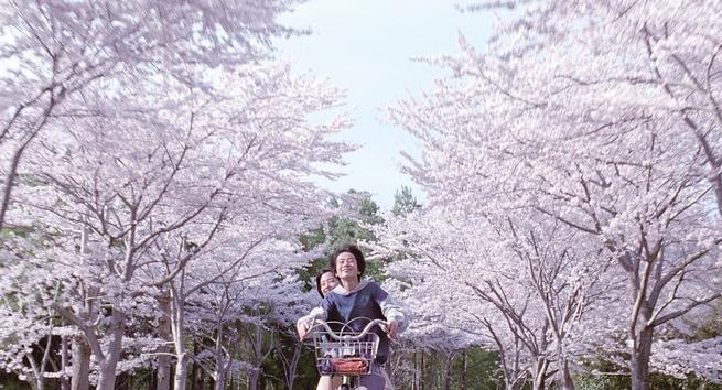 Ohshirô Maeda, Suzu Hirose