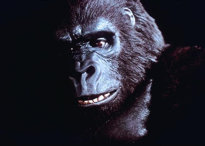 1/3 - King Kong