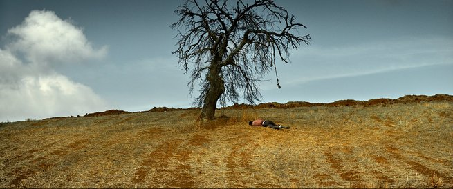 2/2 - L'albero dei frutti selvatici