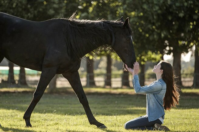 Black Beauty - Autobiografia di un cavallo