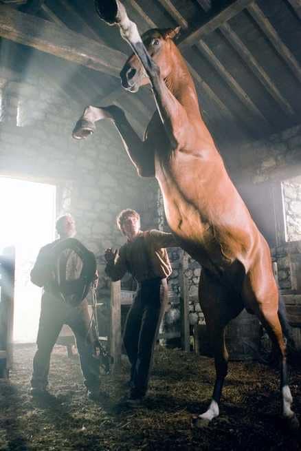 1/7 - War Horse