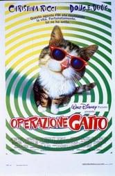 Operazione gatto