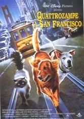 Quattro zampe a San Francisco