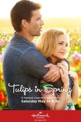 I tulipani dell'amore