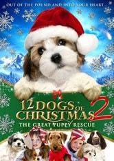 12 cuccioli da salvare