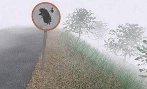 Recensione su il riccio nella nebbia the hedgehog in