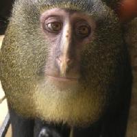 una scimmia nel cervello