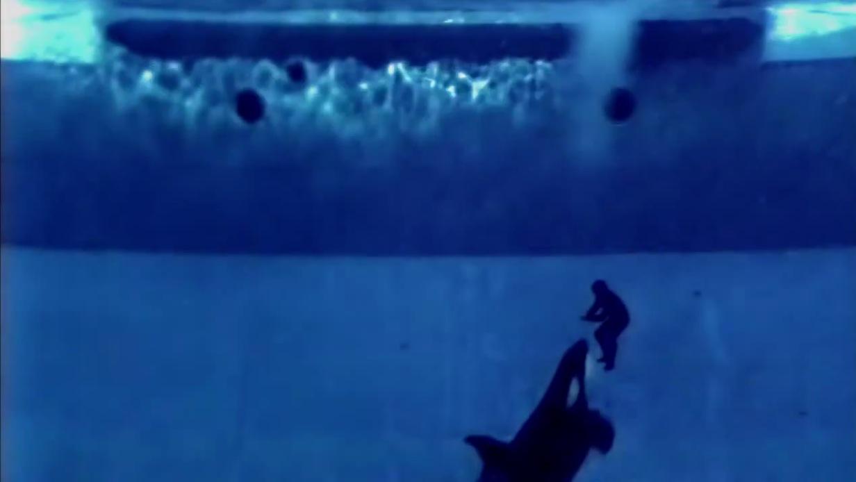 Blackfish (2013)   FilmTV.it - photo#7